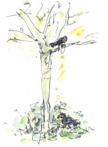 vogels in boom en op de grond 001kopieklein