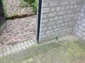 foto viooltje achterdeur