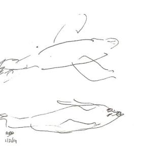 zeehonden 001kleinekopie