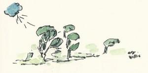 Zijwind bomen kopieklein